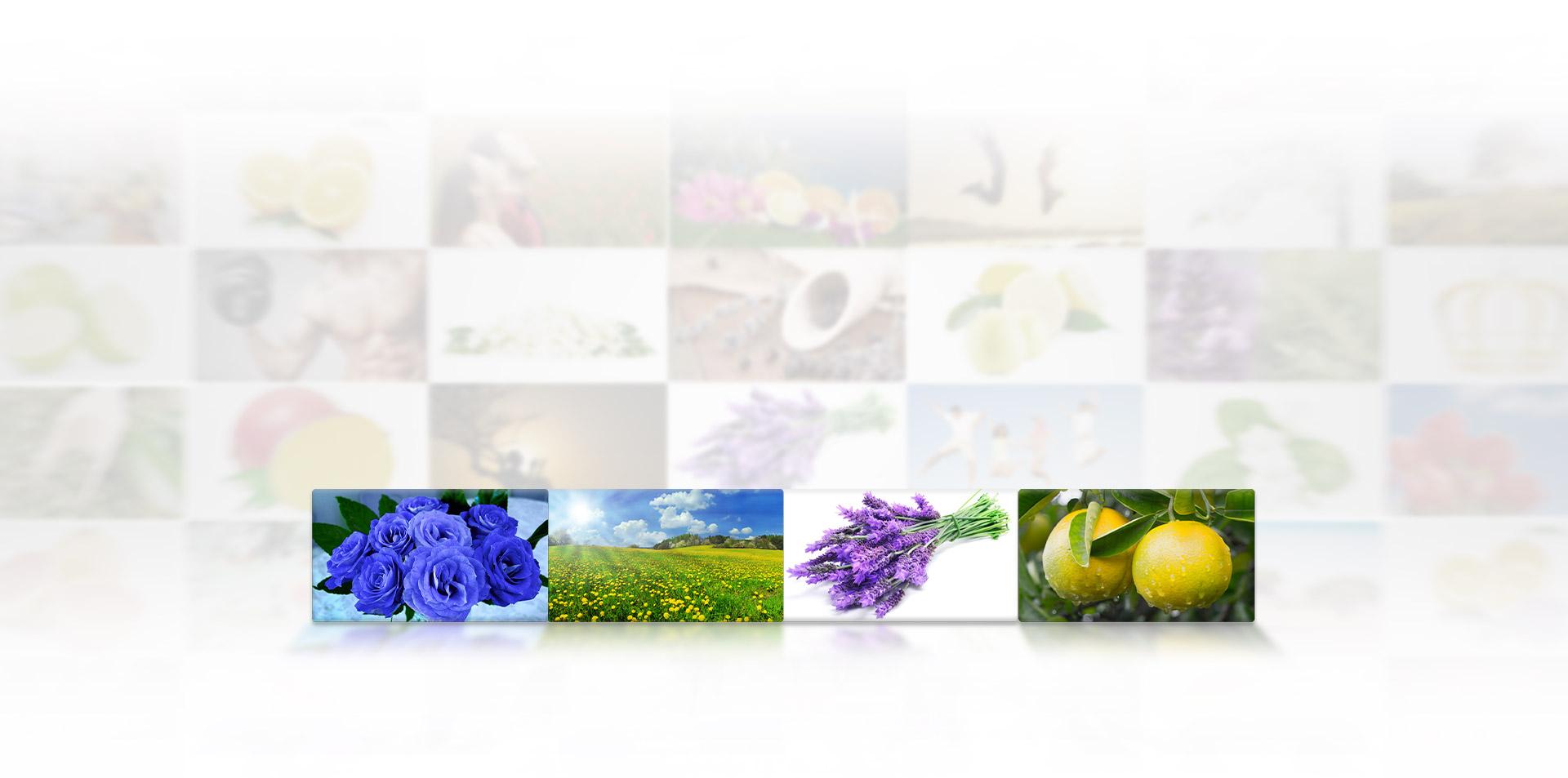 Essential Oils & Special Blends